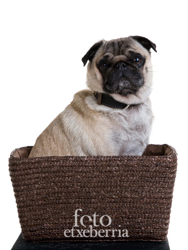 foto etxeberria-reportaje fotográfico-retrato-estudio-mascotas